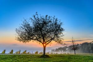 Deutschland, Baden-Württemberg, Bodensee, Meersburg, Weinberg mit Apfelbaum nahe Meersburg, Blick vom Höhenweg nahe Wetterkreuz