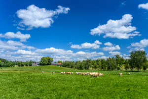 Germany, Bavaria, Upper Bavaria, Tölzer Land, Geretsried, Schwaigwall district, cattle pasture with farm