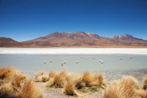 Bolivia, Eduardo Abaroa Andean Fauna National Reserve, lake, flamingos