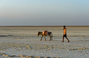 Shepherd with donkey on the dry Assale Salt Lake, Danakil Valley, Afar Region, Ethiopia