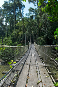 Hängebrücke über den Danum Fluss, Danum Tal Schutzzone (Danum Valley Conservation Area), Sabah, Borneo, Malaysia