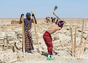 Traditioneller Abbau von Salz am Assale Salzsee. Focolo genannte Afar Salzarbeiter brechen mit hölzernen Brechstangen und Äxten Salzblöcke aus der Salzkruste des Assale Sees, bei Hamadela, Danakil Depression, Afar Region, Äthiopien