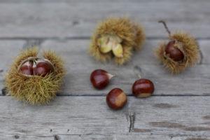 Sweet chestnuts, sweet chestnut, fruit, peel on wooden