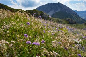Flower meadow, Rüfispitz, heaven