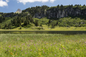 Körbersee, cliff face, wood, meadow, shore, summit