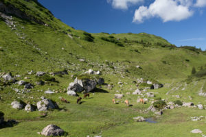 grazing horses, mountain pasture, Alp, heavens, rocks
