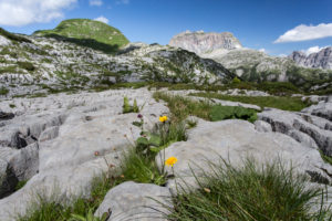 Flowers, grass, crevices, carts, heavens, summits, clouds