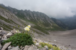 Alps poppy seed, debris fields, summits, mountains, clouds