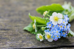 Bunch from strawberry flower and forget-me-not on old wooden bench, close-up,