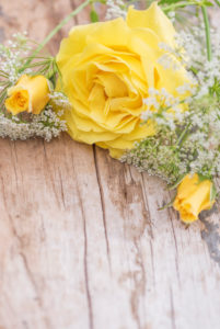 gentle yellow rose with rosebuds and white little blossoms arranged on old wooden board,