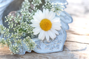 Old cornett tea trunker with marguerite blossom and many little blossoms decorates on wooden board