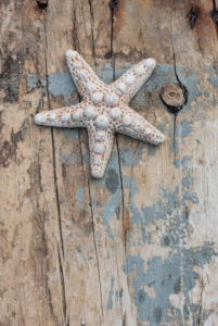 Starfish on old wooden board, maritime still life,