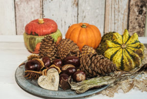 Autumnal still life with pumpkin, cone and chestmothers on old stannic plate