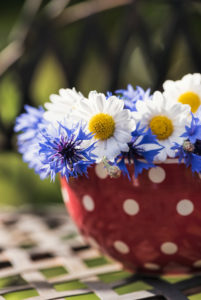 floral still life, marguerites and cornflowers in white red pointed bowl on old chair,