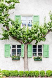 Obstbaum am Haus
