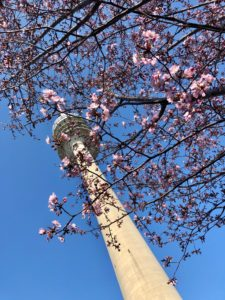 Olympiaturm München Olympiapark Kirschblüte