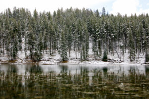 Yellowstone National Park, winter snow snow covered fir trees