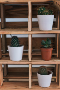 Mini cacti on a shelf / room decoration, close-up