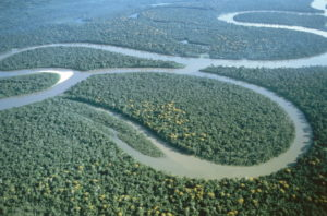 Peru, Amazon, Aerial View America, South America, Nature, Forest, Rainforest, Rainforest, Primeval Forest, River, Stream, South America's Largest Stream, Overview, Nature, Vegetation