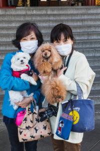 Japan, Honshu, Tokyo, Asakusa, Women with Allergy Masks Holding Pet Dogs