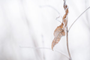 Close up of hoarfrost on dry leaf