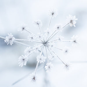 Close up of ice crystals on dry plant