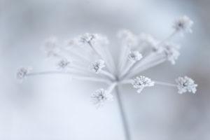 Beautiful Grayish-white Crystalline On Dry Plant