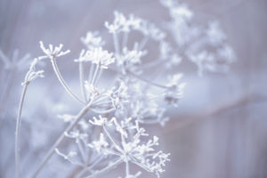 Close up of frosty plant with ice crystals