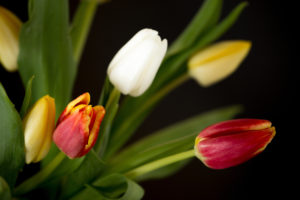 Colorful tulip bouquet on a black background