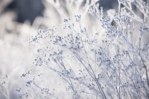 Beautiful ice crystal on dried plants on grey background