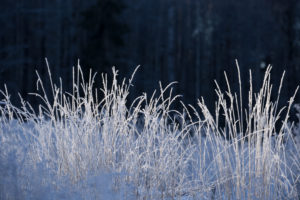 Close-up of frozen plants with dark blue natural background