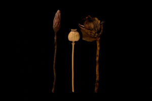 Dried exotic plants on a black background