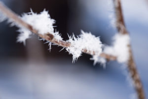 Close-up of frost on top of a branch with a blue background