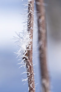 Twigs with hoarfrost on a pastel blue background