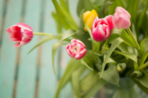 Bundle of joy, tulip bouquet in springtime