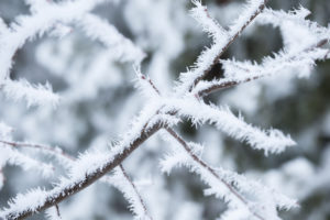 Close-up of frozen tree branch covered with thick white hoarfrost