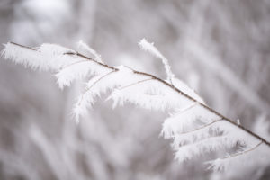 Close up of frozen branch, covered with thick white hoarfrost, blurred background