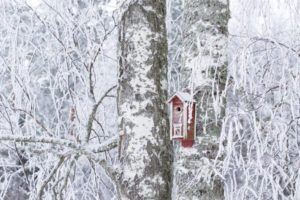 Frozen birch tree branches covered with white hoarfrost with birdhouse
