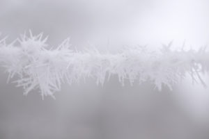 Closeup of frozen branch, covered with thick white hoarfrost, blurred background