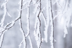 Frozen birch twigs covered with white hoarfrost, blurred background