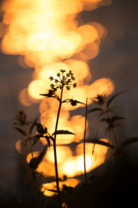 Plant silhouetted against orange shining light reflections in the background