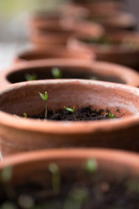 Flower pots, growing seedlings