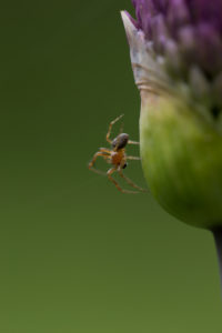 Spider with a flower bud, green natural background