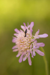Insects on flower top, green natural background