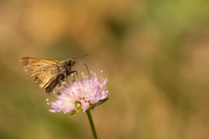 Butterfly on Flower top, natural blurred background