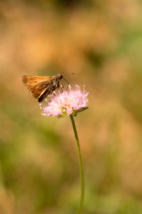 Butterfly on Flower, natural background