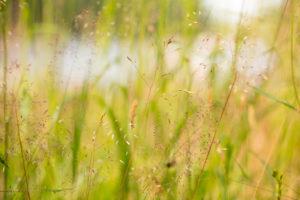 Hays Landscape, summer scenery