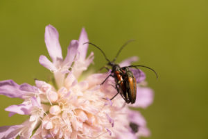 Overlapping Insects on Flower, nature green background