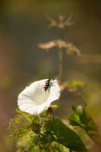 Insect on a white petal, closeup, nature background