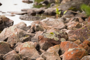 Wagtail on the rock, lake shore, Finland